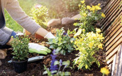 Bewusster gärtnern